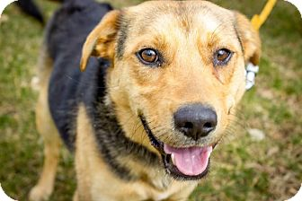 Shepherd (Unknown Type) Mix Dog for adoption in Providence Forge, Virginia - Max