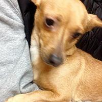 Adopt A Pet :: ! Lady - Colton, CA