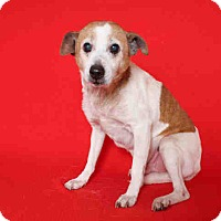 Adopt A Pet :: ID#A0888837 @  North Central - Beverly Hills, CA