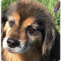 Adopt A Pet :: INDY - LaGrange, KY