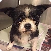 Adopt A Pet :: Elvie - Orlando, FL