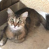 Adopt A Pet :: Sapphire - Menifee, CA