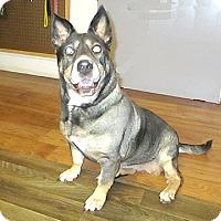 Adopt A Pet :: 17-d06-003 Rocket - Fayetteville, TN
