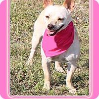 Adopt A Pet :: Missy - Hillsboro, TX