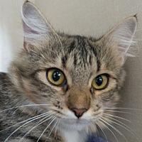 Adopt A Pet :: Elinor - Redwood City, CA