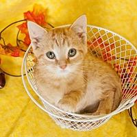 Adopt A Pet :: Captain Underpants - Muskegon, MI