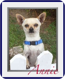 Pug/Miniature Pinscher Mix Dog for adoption in Orange, California - Annie