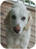 Labrador Retriever Mix Dog for adoption in Foster, Rhode Island - Marley