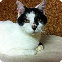 Adopt A Pet :: Lucky Boy - Kalamazoo, MI
