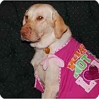 Adopt A Pet :: Emma - Houston, TX