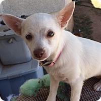 Adopt A Pet :: FERN - Higley, AZ