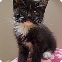 Adopt A Pet :: Juan - Delmont, PA