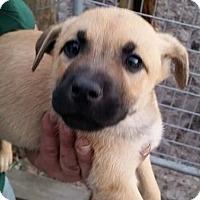 Adopt A Pet :: Prairie - Gainesville, FL
