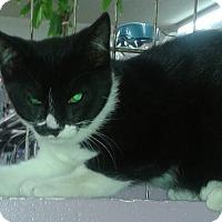 Adopt A Pet :: Kyla - Whittier, CA