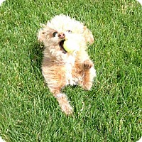 Adopt A Pet :: Mimi Anne - Salt Lake City, UT