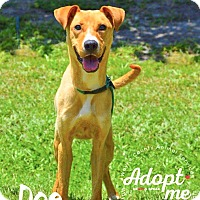 Adopt A Pet :: Doe - Manhasset, NY