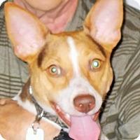 Adopt A Pet :: Jasper - Plain City, OH
