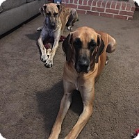 Adopt A Pet :: Donovan and MJW a bonded pair! - Hagerstown, MD