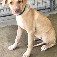 Adopt A Pet :: Tina - Fresno, CA