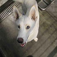 Adopt A Pet :: PALOMA - Los Angeles, CA