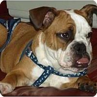 Adopt A Pet :: caleb - conyers, GA