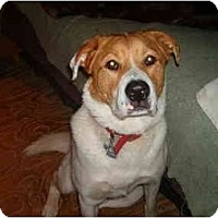 Adopt A Pet :: Sampson - North Jackson, OH