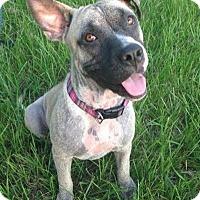 Adopt A Pet :: Daisy - Orlando, FL