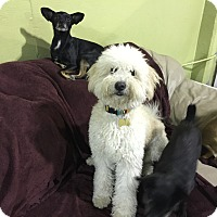 Adopt A Pet :: Jordan..I love dogs! - Redondo Beach, CA