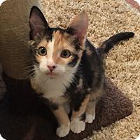 Adopt A Pet :: Freckles - Birmingham, AL