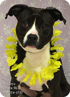 Pointer Mix Dog for adoption in Newnan City, Georgia - Rex