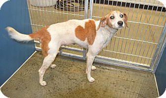 Hound (Unknown Type) Mix Dog for adoption in Henderson, North Carolina - Gina