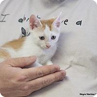 Adopt A Pet :: Periwinkle - Marietta, GA