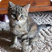 Adopt A Pet :: Diana - Breese, IL