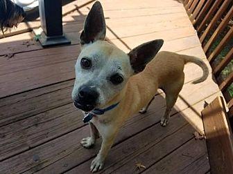 Terrier (Unknown Type, Medium) Mix Dog for adoption in Shelburne, Vermont - Dino