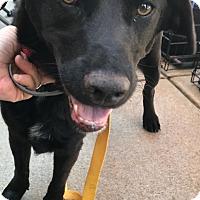 Adopt A Pet :: Pumpkin - Hohenwald, TN