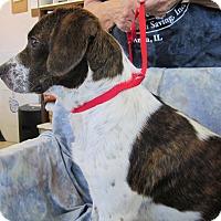 Beagle Mix Dog for adoption in Anna, Illinois - DOODLE