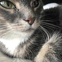 Adopt A Pet :: Jewel - Washington, DC