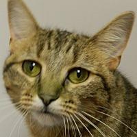 Adopt A Pet :: Ebony - Columbus, NE