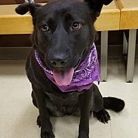 Adopt A Pet :: Quinn - Lyles, TN