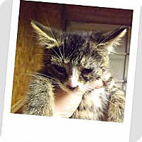 Adopt A Pet :: Spice - Owosso, MI