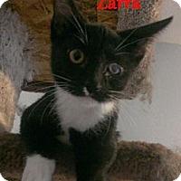 Adopt A Pet :: Zarra - Chandler, AZ