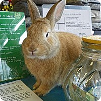 Adopt A Pet :: Dill - North Gower, ON