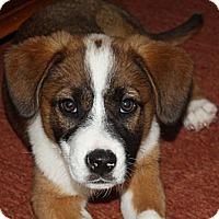 Adopt A Pet :: Georgia & Gracelyn - PENDING - kennebunkport, ME
