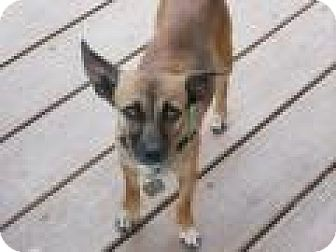 Chihuahua/Terrier (Unknown Type, Small) Mix Dog for adoption in Mount Pleasant, South Carolina - Missy