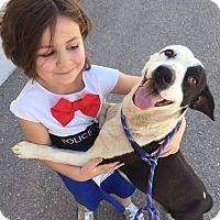 Adopt A Pet :: Oreo C. - Alamogordo, NM