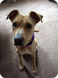 Retriever (Unknown Type)/Terrier (Unknown Type, Medium) Mix Dog for adoption in Baltimore, Maryland - Summer