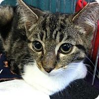Adopt A Pet :: Shellie - Seminole, FL