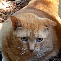 Adopt A Pet :: Olivia - Melrose, FL