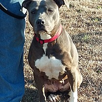 Adopt A Pet :: Daphney - Carthage, NC