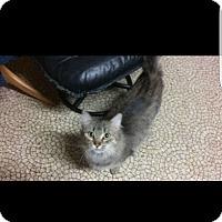 Adopt A Pet :: Marly - Leamington, ON